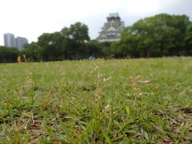 1/25(土) 2020は大阪城公園の「緑化ボランティア」でスタート!
