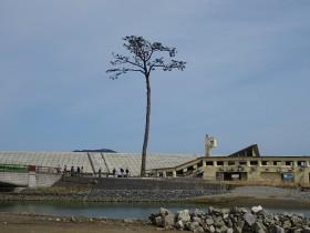 陸前高田の今を見る 海岸林再生ボランティア