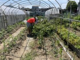 第1期 福祉農園「life farm」運営ボランティア募集