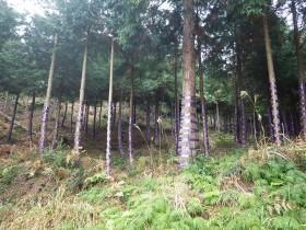 11月開催☆豊かな森を残そう!森林ボランティア募集中!